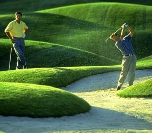 golf_golf